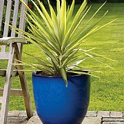 Apta Cambridge Glazed Egg Planter (Various Sizes)