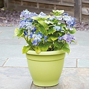Stewart Garden Essentials Planter 39cm (Various Colours)