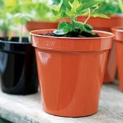 Terracotta Premium Flower Pot - Various Sizes