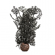 biOrb Black Sea Fan